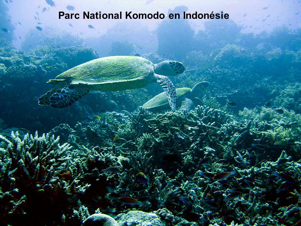 Indonesia's Komodo national park. Parc National Komodo en Indonésie