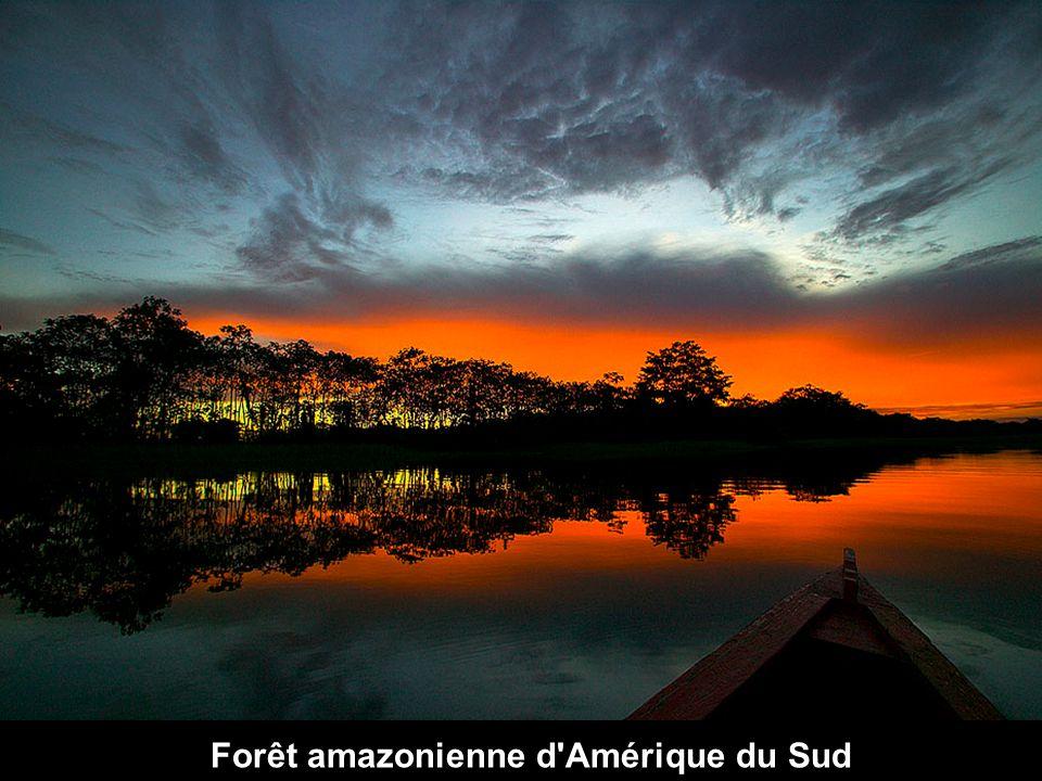 Forêt amazonienne d'Amérique du Sud
