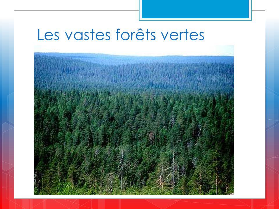 Les vastes forêts vertes
