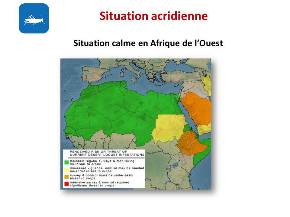 Situation acridienne Situation calme en Afrique de l'Ouest