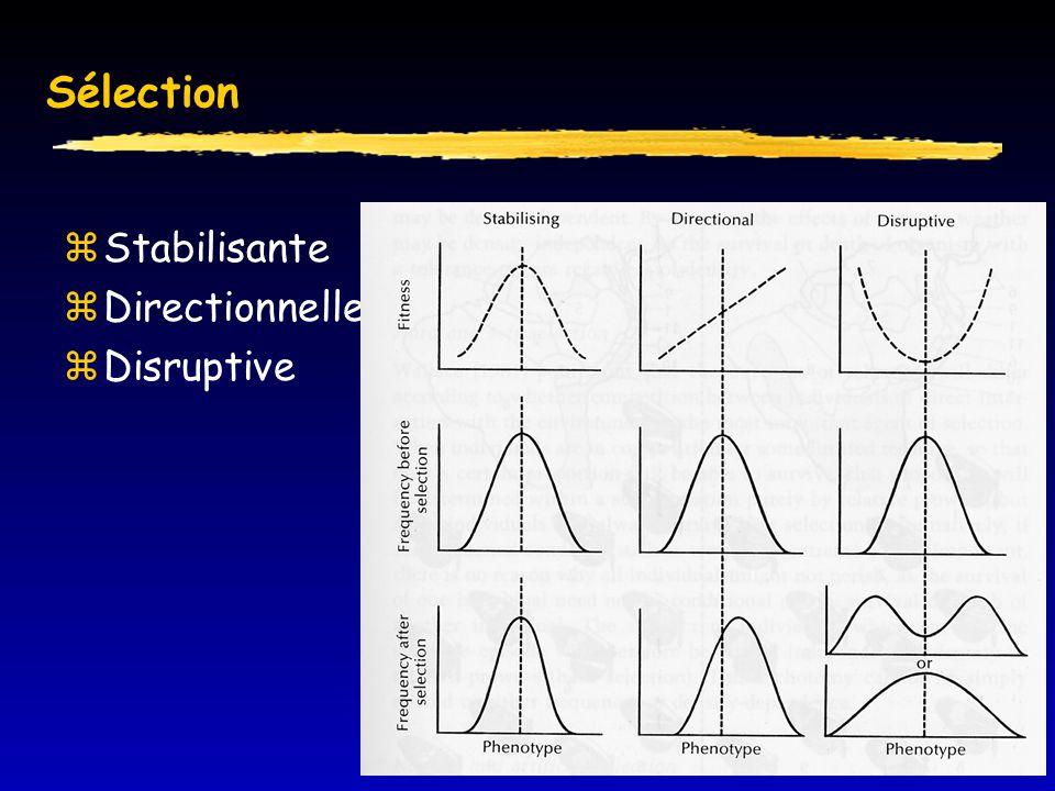 Sélection  Stabilisante  Directionnelle  Disruptive