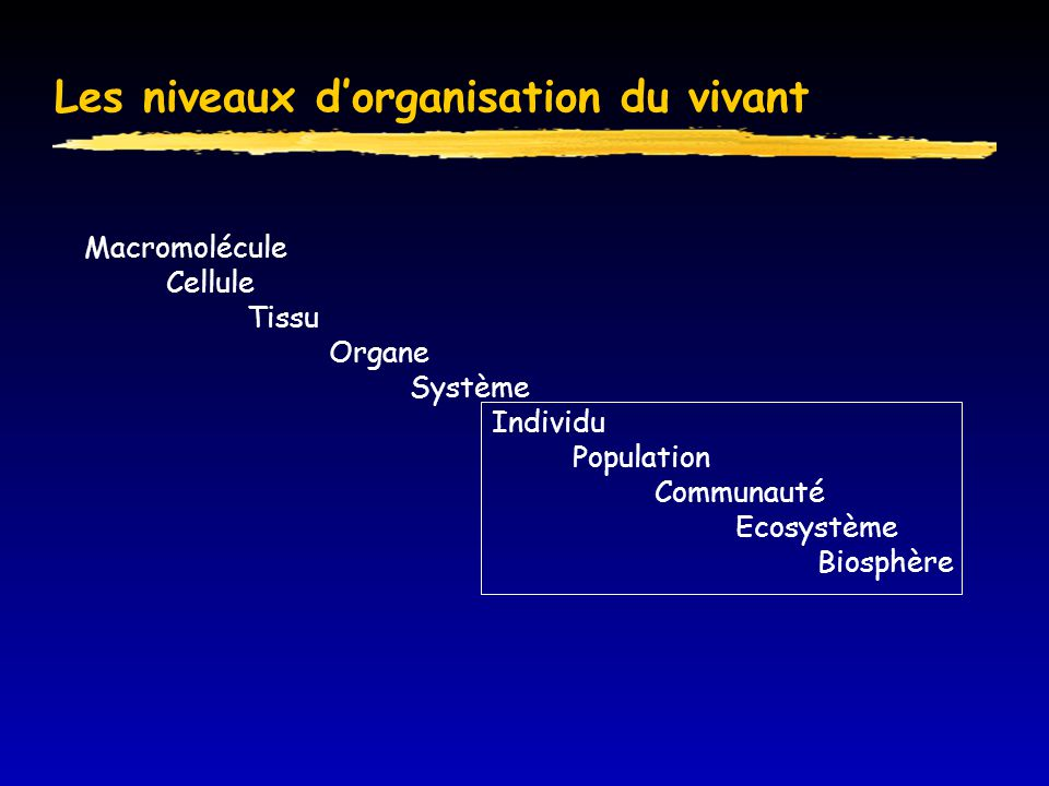 Relation structure sociale-structure spatiale