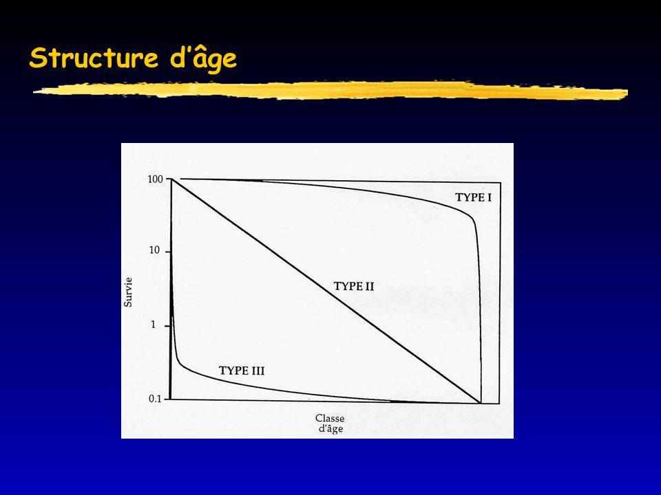 Structure d'âge