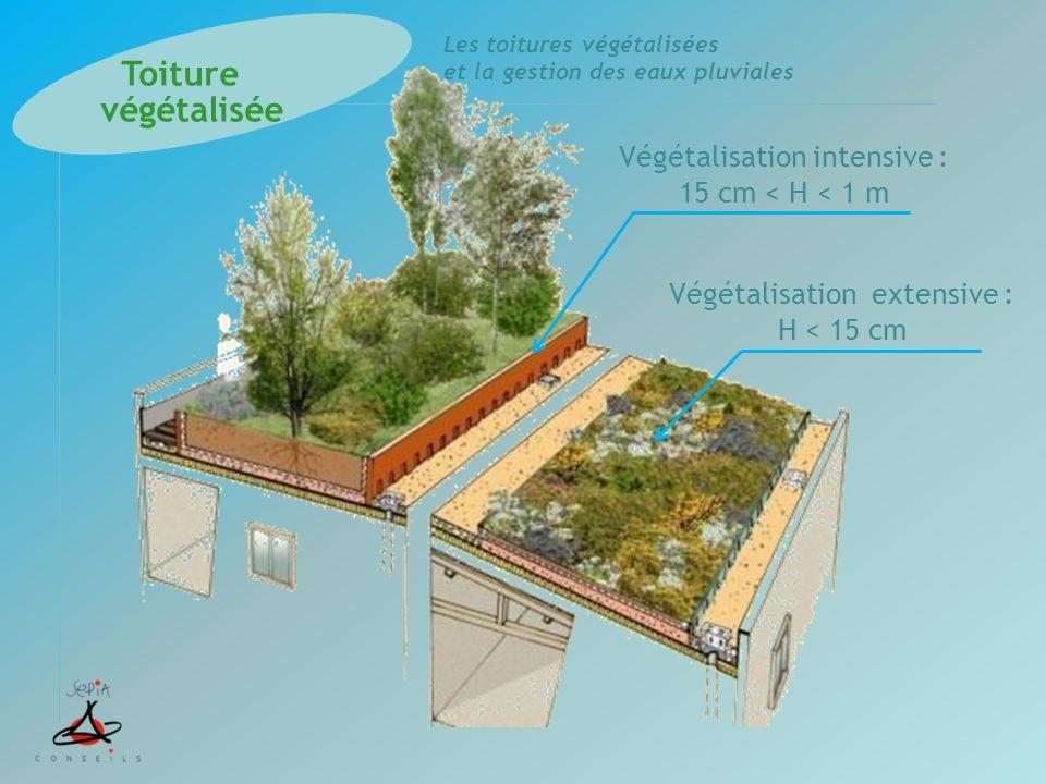 Les toitures végétalisées et la gestion des eaux pluviales Végétalisation intensive : 15 cm < H < 1 m Végétalisation extensive : H < 15 cm Toiture vég