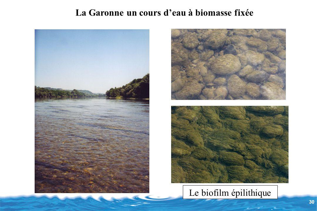 30 Le biofilm épilithique La Garonne un cours d'eau à biomasse fixée