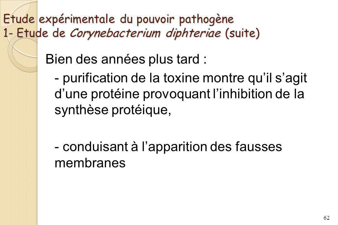 Etude expérimentale du pouvoir pathogène 1- Etude de Corynebacterium diphteriae (suite) Bien des années plus tard : - purification de la toxine montre