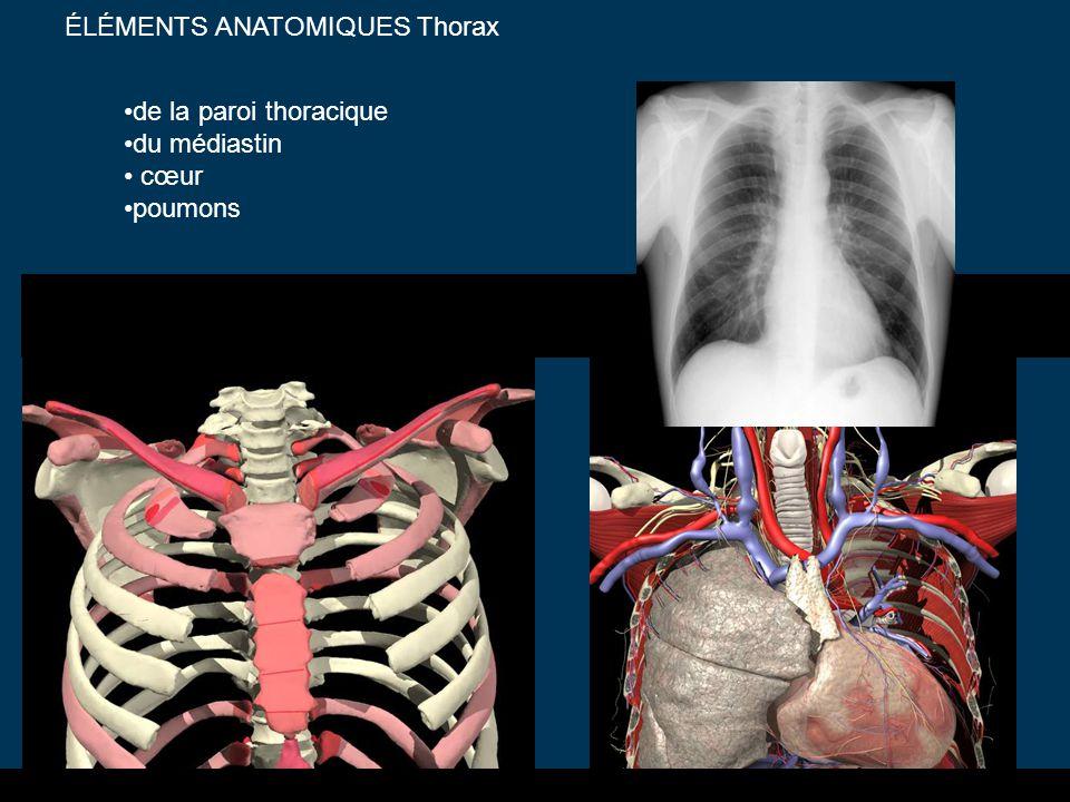 ÉLÉMENTS ANATOMIQUES Thorax de la paroi thoracique du médiastin cœur poumons
