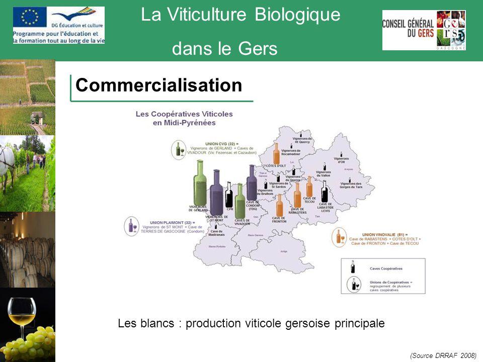 La Viticulture Biologique dans le Gers Commercialisation Les blancs : production viticole gersoise principale (Source DRRAF 2008)