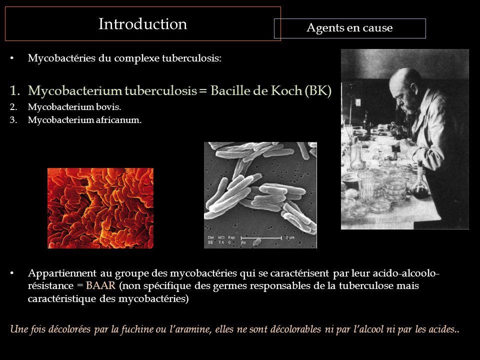 Introduction Mycobactéries du complexe tuberculosis: 1.Mycobacterium tuberculosis = Bacille de Koch (BK) 2.Mycobacterium bovis. 3.Mycobacterium africa