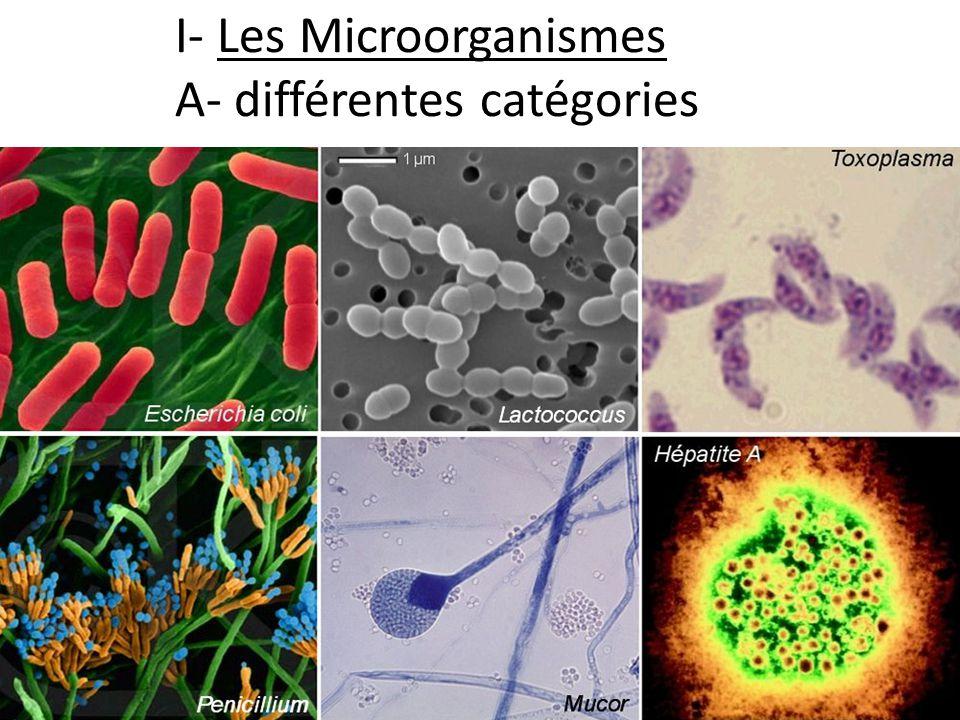 Différents microorganismes sont susceptibles de contaminer les aliments: -Bactériesex Listeria (rappel de 2 e : procaryotes = pas de noyau dans les cellules) -Protozoairesex.: Toxoplasme -Champignonsex.: moisissures à aflatoxines -(des virus peuvent aussi être présents; mais ils sont considérés comme hors du vivant du fait de leur structure non cellulaire)
