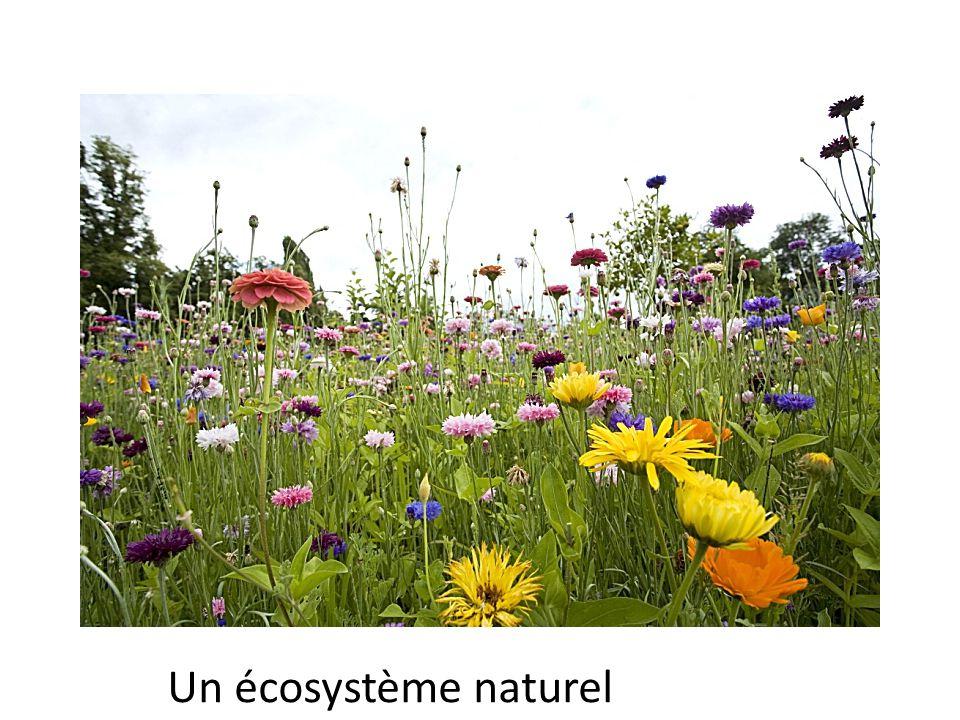 Ecosystème Un écosystème naturel
