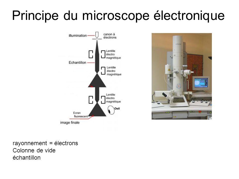 Principe du microscope électronique rayonnement = électrons Colonne de vide échantillon