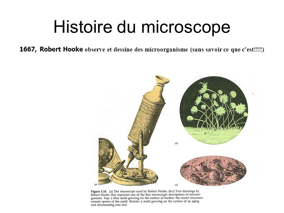 Histoire du microscope 1667, Robert Hooke observe et dessine des microorganisme (sans savoir ce que c'est!!!!)