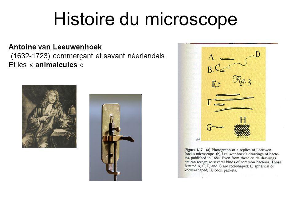 Histoire du microscope Antoine van Leeuwenhoek (1632-1723) commerçant et savant néerlandais. Et les « animalcules «