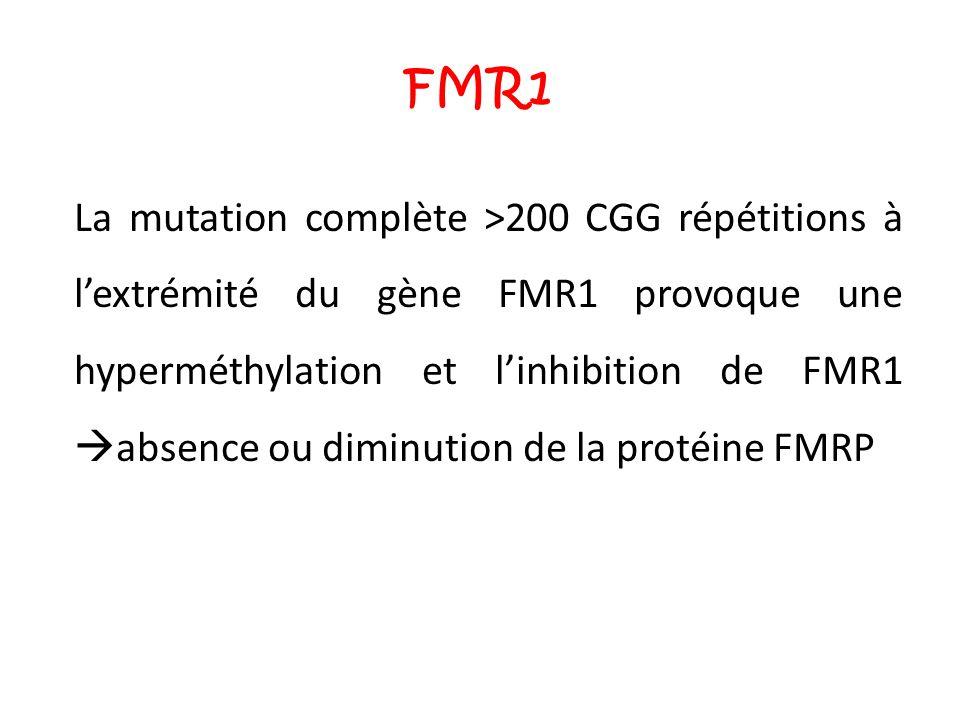 FMR1 La mutation complète >200 CGG répétitions à l'extrémité du gène FMR1 provoque une hyperméthylation et l'inhibition de FMR1  absence ou diminutio