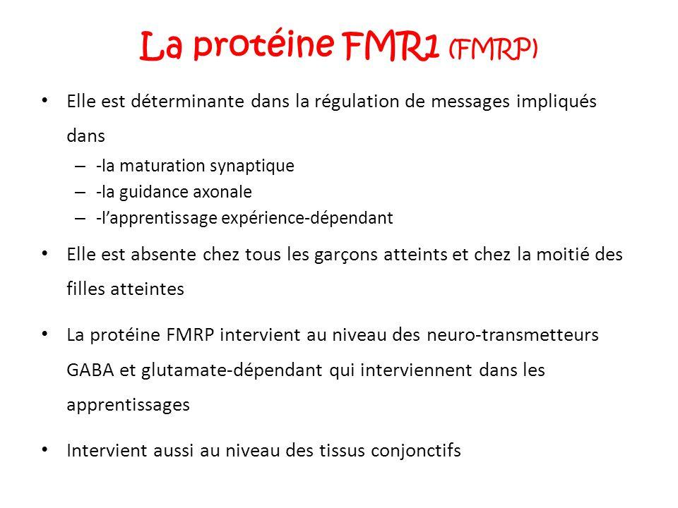 La protéine FMR1 ( FMRP ) Elle est déterminante dans la régulation de messages impliqués dans – -la maturation synaptique – -la guidance axonale – -l'