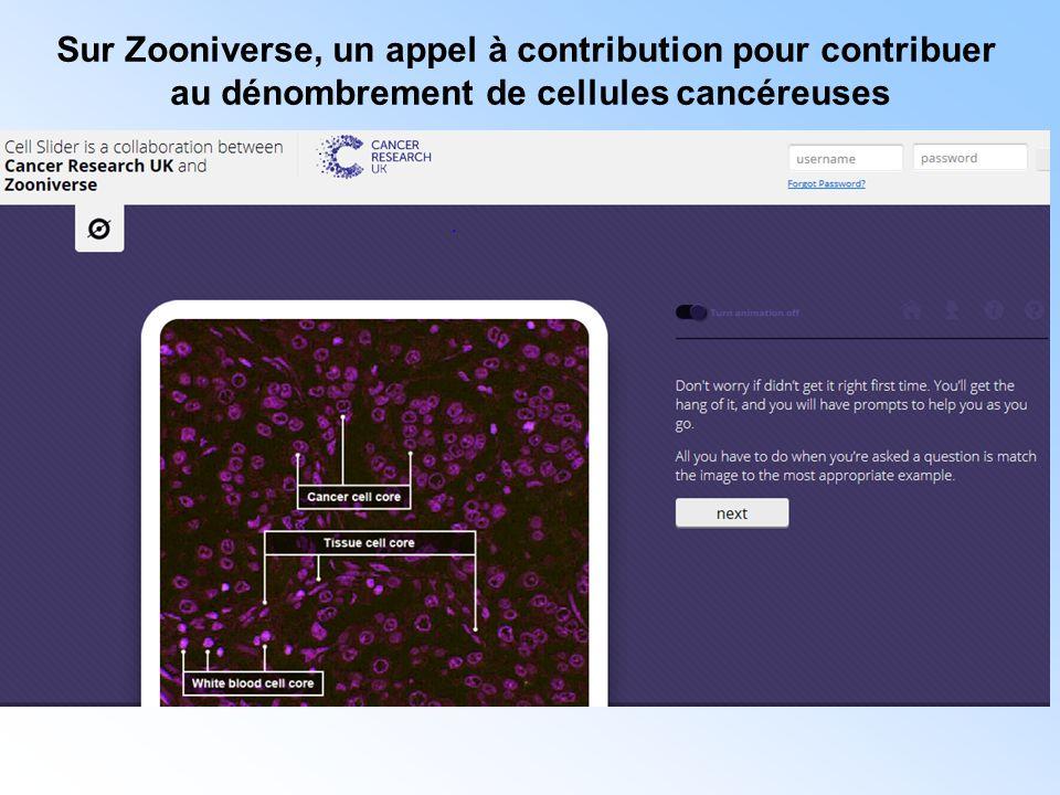 Sur Zooniverse, un appel à contribution pour contribuer au dénombrement de cellules cancéreuses