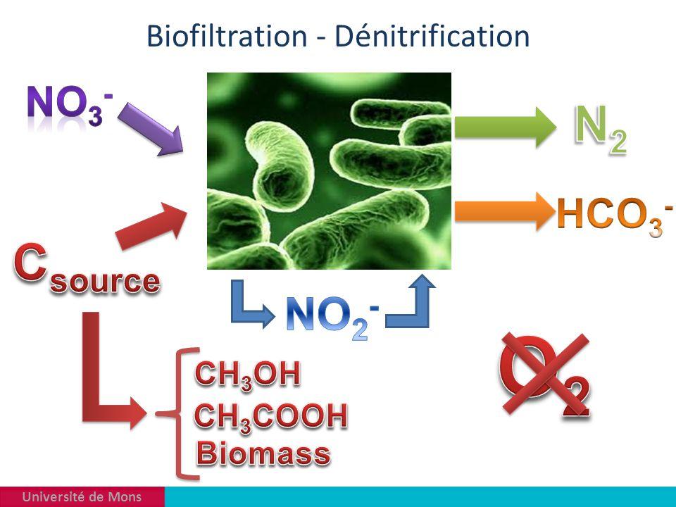 Université de Mons Biofiltration - Dénitrification