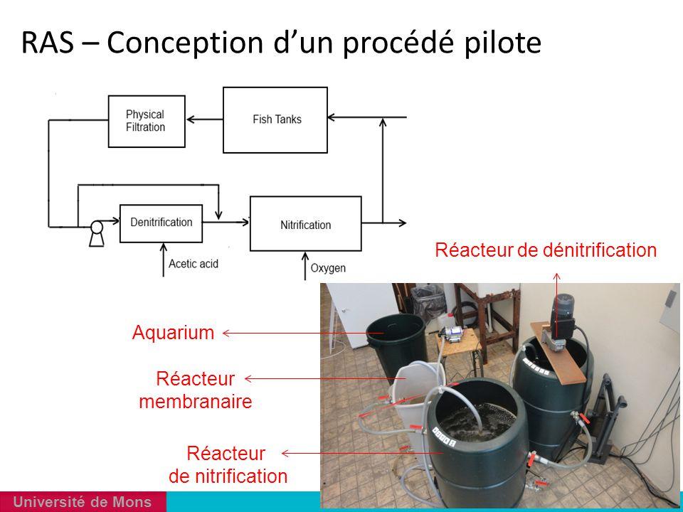 Université de Mons Réacteur membranaire Réacteur de nitrification Réacteur de dénitrification Aquarium RAS – Conception d'un procédé pilote