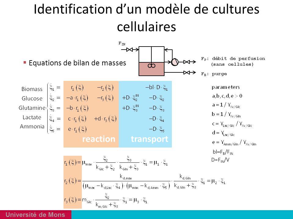 Université de Mons  Equations de bilan de masses transportreaction  bl  F B /F IN D=F IN /V F P : débit de perfusion (sans cellules) F B : purge F
