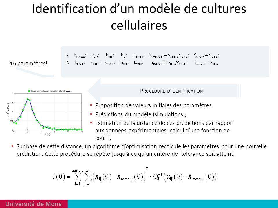 Université de Mons Identification d'un modèle de cultures cellulaires  Sur base de cette distance, un algorithme d'optimisation recalcule les paramèt