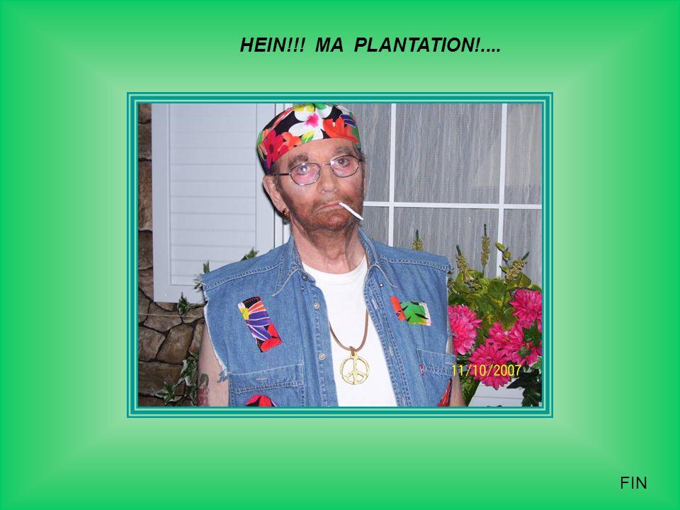 HEIN!!! MA PLANTATION!.... FIN