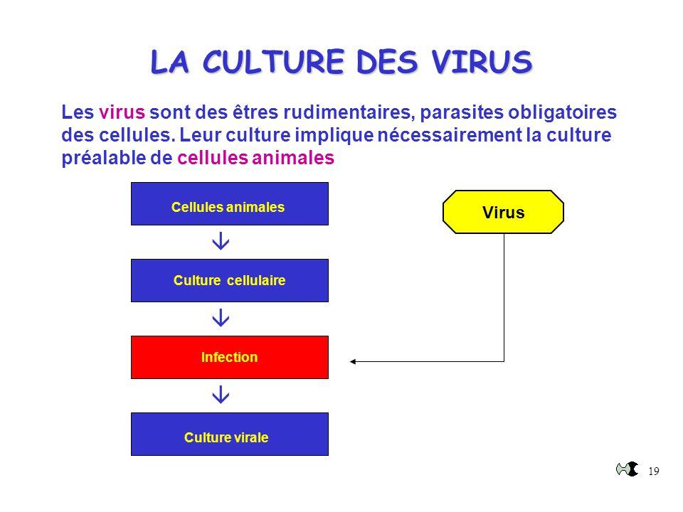 19 Les virus sont des êtres rudimentaires, parasites obligatoires des cellules. Leur culture implique nécessairement la culture préalable de cellules