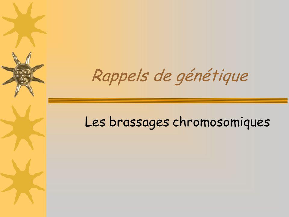 Rappels de génétique Les brassages chromosomiques
