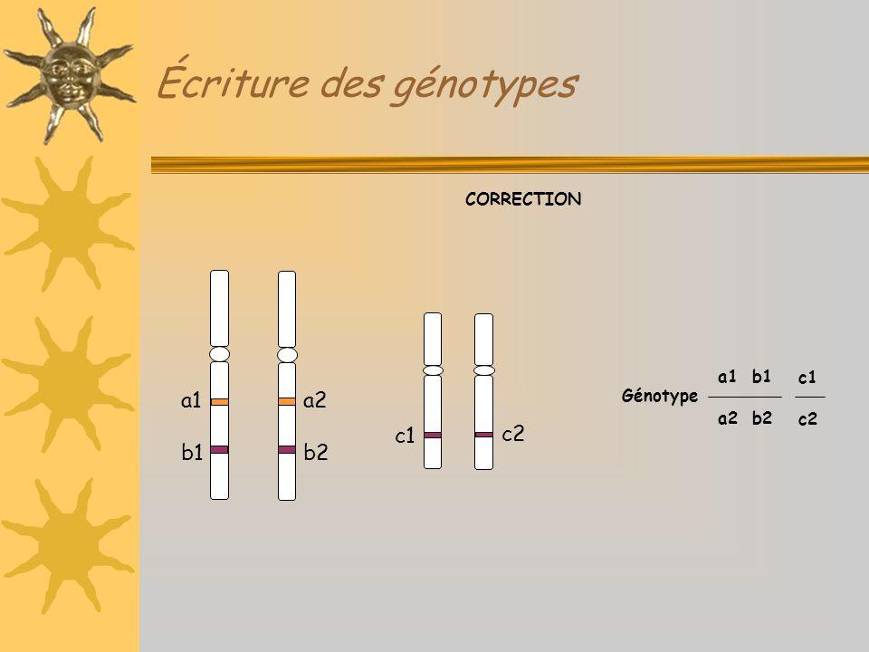 Écriture des génotypes Génotype CORRECTION c1 c2 c1 c2 a1 b1 a2 b2 a1 b1 a2 b2
