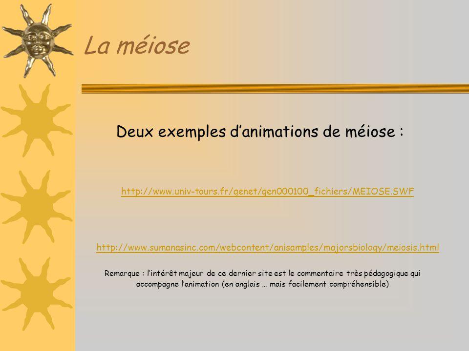 La méiose Deux exemples d'animations de méiose : Remarque : l'intérêt majeur de ce dernier site est le commentaire très pédagogique qui accompagne l'a
