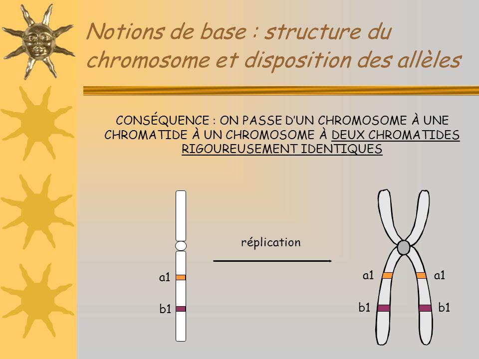 Notions de base : structure du chromosome et disposition des allèles CONSÉQUENCE : ON PASSE D'UN CHROMOSOME À UNE CHROMATIDE À UN CHROMOSOME À DEUX CH