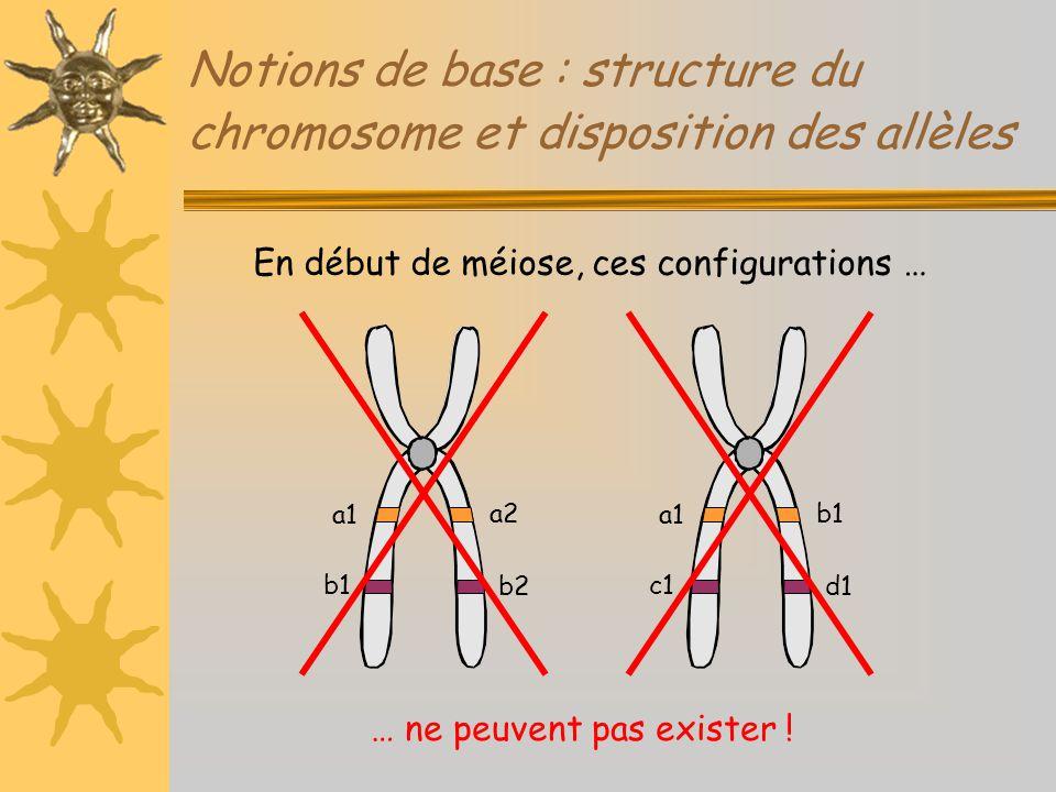Notions de base : structure du chromosome et disposition des allèles a1 b1 a2 b2 En début de méiose, ces configurations … a1 c1 b1 d1 … ne peuvent pas