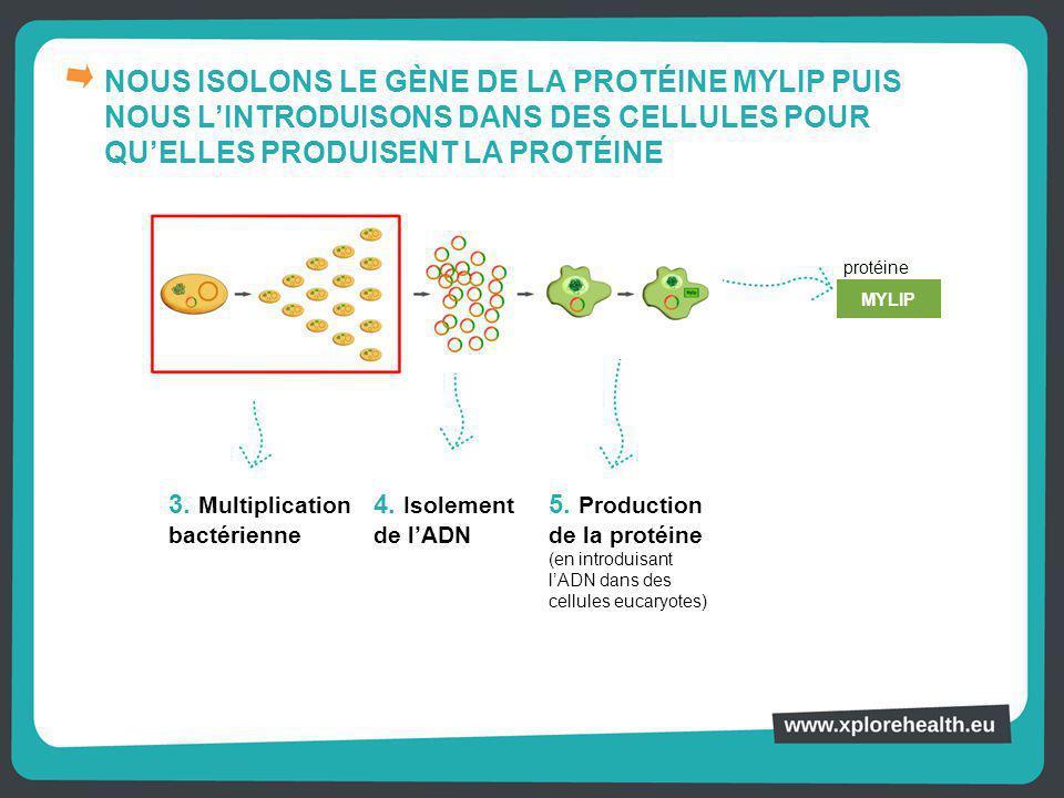 NOUS ISOLONS LE GÈNE DE LA PROTÉINE MYLIP PUIS NOUS L'INTRODUISONS DANS DES CELLULES POUR QU'ELLES PRODUISENT LA PROTÉINE 3. Multiplication bactérienn