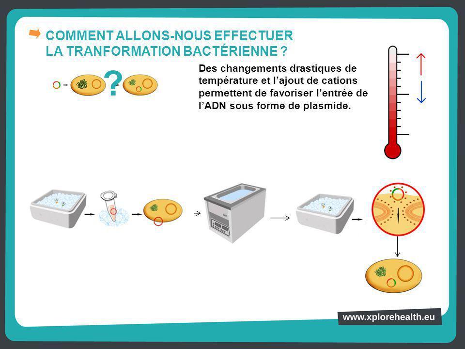 COMMENT ALLONS-NOUS EFFECTUER LA TRANFORMATION BACTÉRIENNE ? Des changements drastiques de température et l'ajout de cations permettent de favoriser l