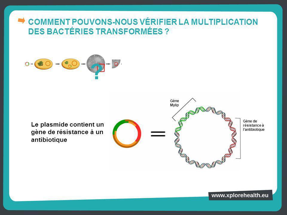 COMMENT POUVONS-NOUS VÉRIFIER LA MULTIPLICATION DES BACTÉRIES TRANSFORMÉES ? Le plasmide contient un gène de résistance à un antibiotique ? Gène Mylip