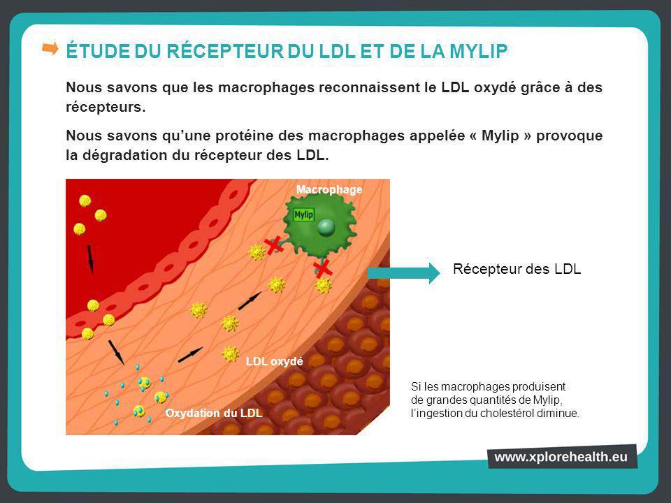 ÉTUDE DU RÉCEPTEUR DU LDL ET DE LA MYLIP Nous savons que les macrophages reconnaissent le LDL oxydé grâce à des récepteurs. Nous savons qu'une protéin