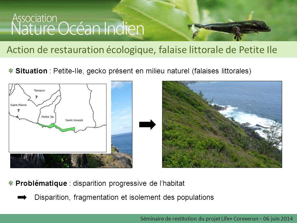 Action de restauration écologique, falaise littorale de Petite Ile Situation : Petite-Ile, gecko présent en milieu naturel (falaises littorales) Probl