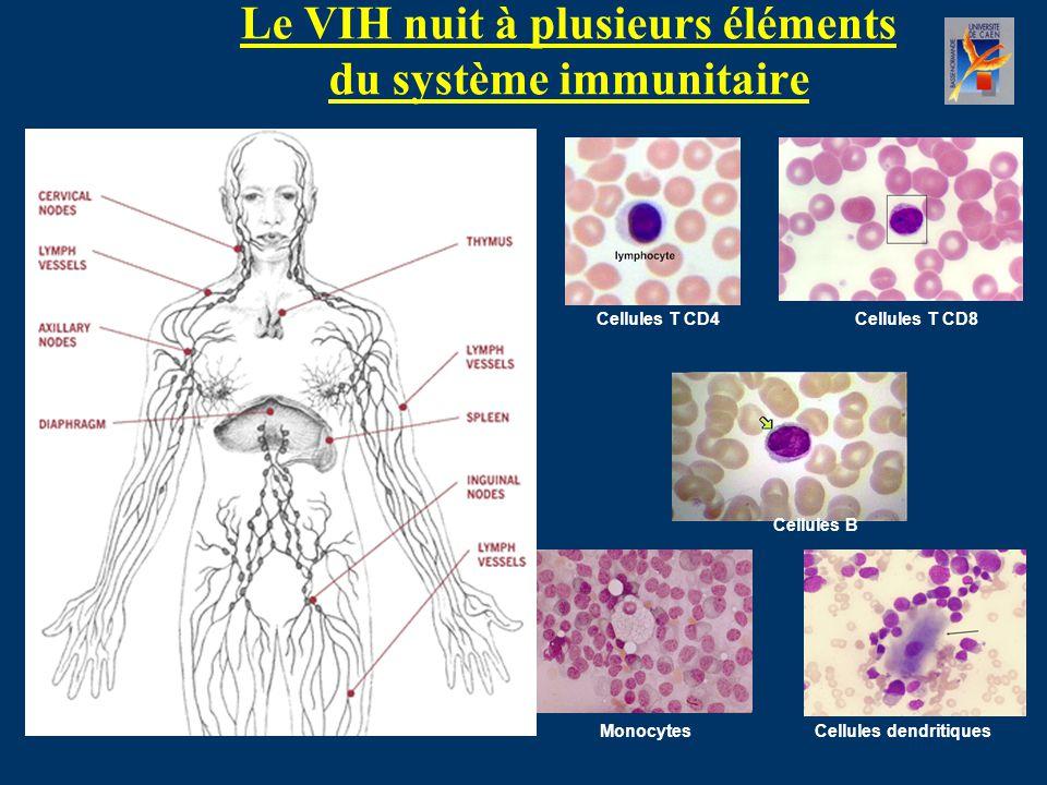 Le VIH nuit à plusieurs éléments du système immunitaire Cellules T CD4Cellules T CD8 Cellules B MonocytesCellules dendritiques