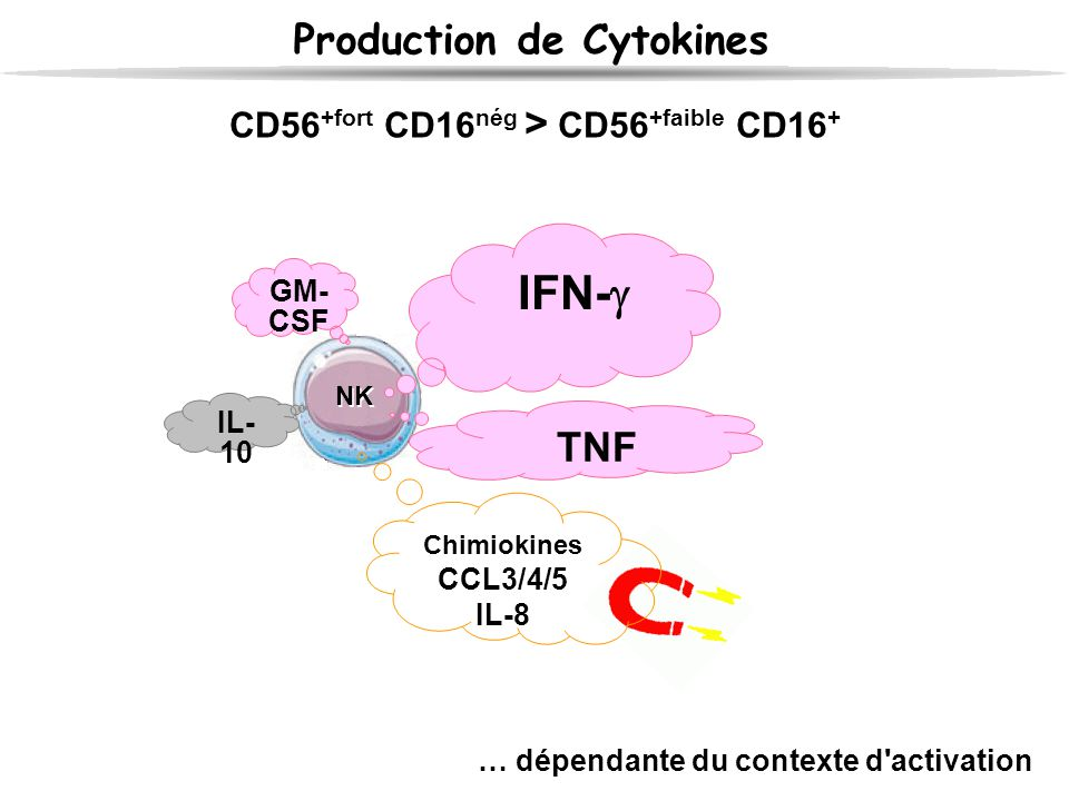 Production de Cytokines NK CD56 +fort CD16 nég > CD56 +faible CD16 + Chimiokines CCL3/4/5 IL-8 IFN-  TNF GM- CSF IL- 10 … dépendante du contexte d'ac