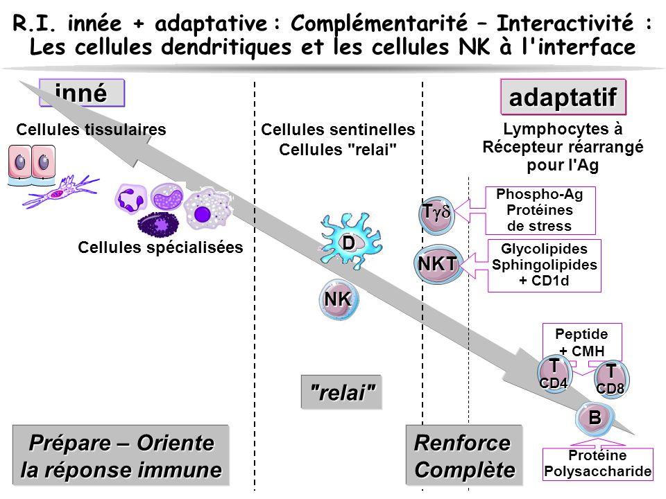 R.I. innée + adaptative : Complémentarité – Interactivité : Les cellules dendritiques et les cellules NK à l'interface innéadaptatif Cellules tissulai