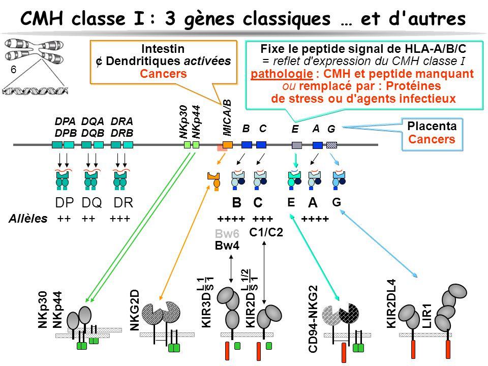 CMH classe I : 3 gènes classiques … et d'autres B C A DPADQA DRA DPBDQB DRB DP DQDR B C A Allèles++ ++ +++ ++++ +++++++ C1/C2 Bw4 KIR3D KIR2D L 1/2 S