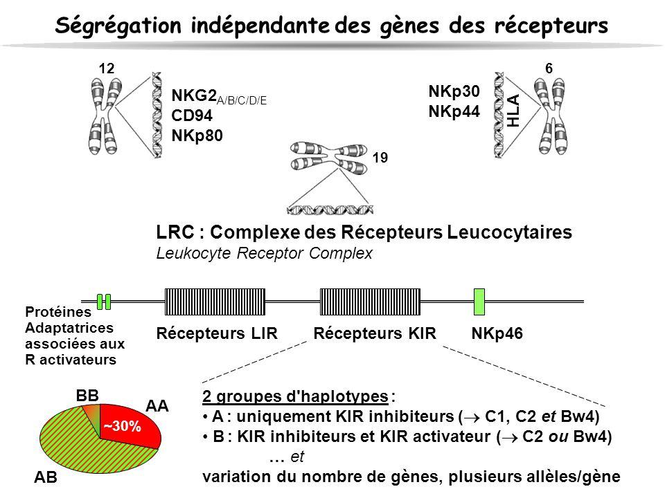 Ségrégation indépendante des gènes des récepteurs LRC : Complexe des Récepteurs Leucocytaires Leukocyte Receptor Complex Récepteurs LIRRécepteurs KIRN