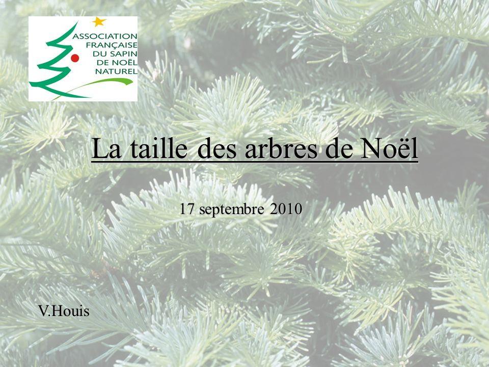 La taille des arbres de Noël 17 septembre 2010 V.Houis
