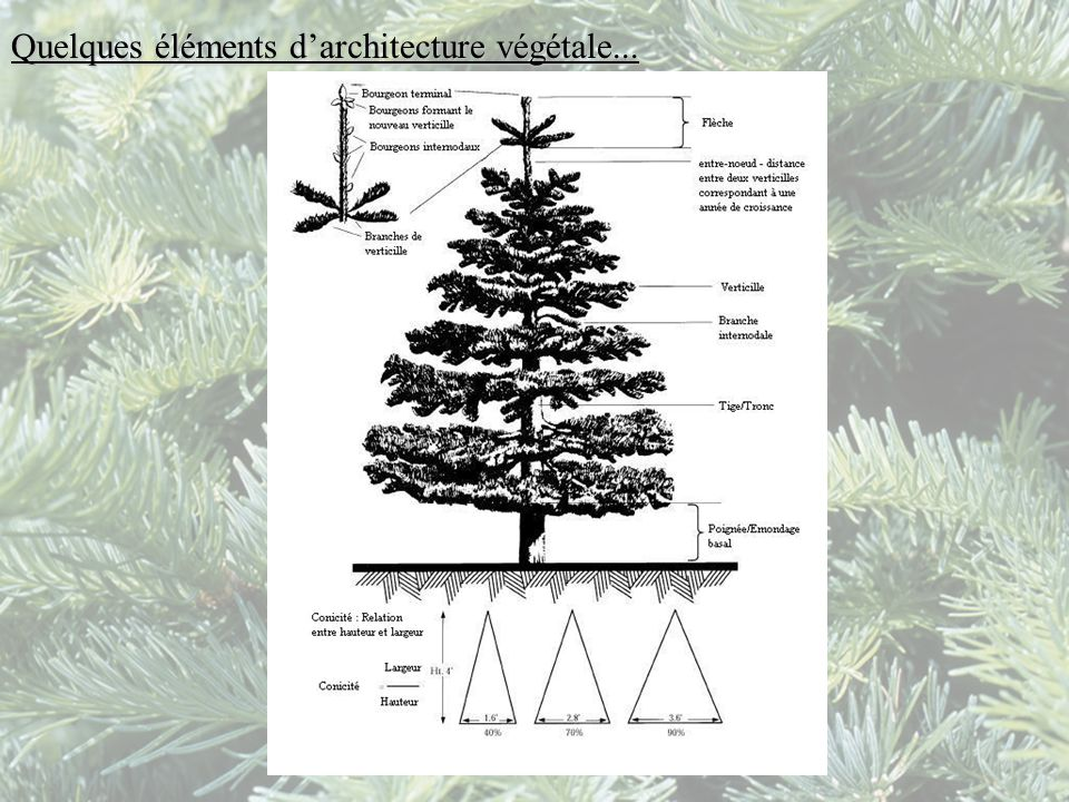 Quelques éléments d'architecture végétale...