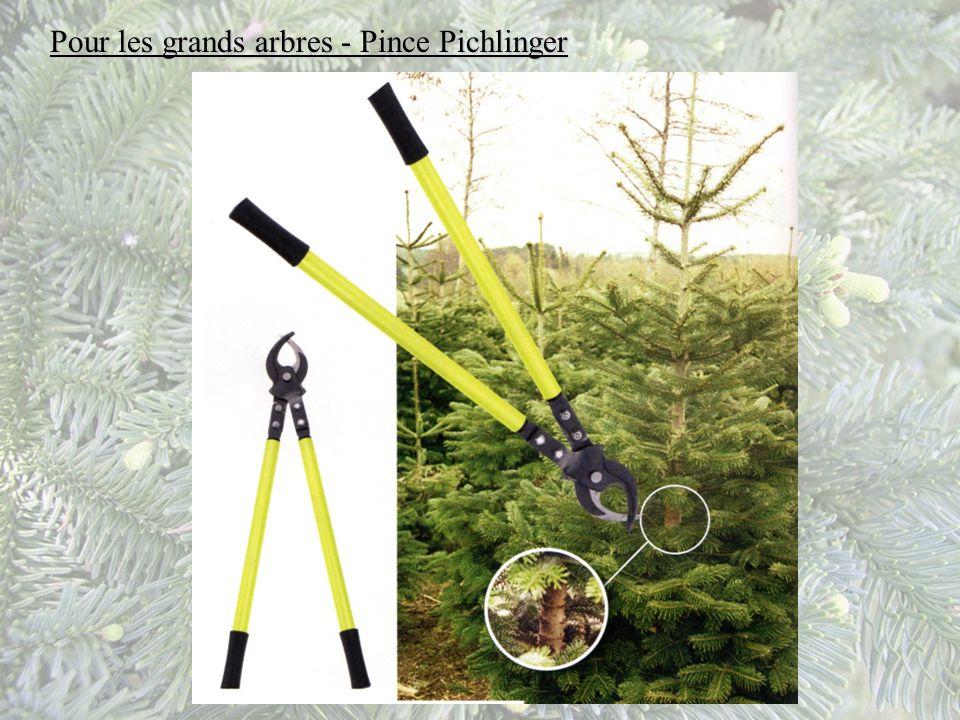 Pour les grands arbres - Pince Pichlinger