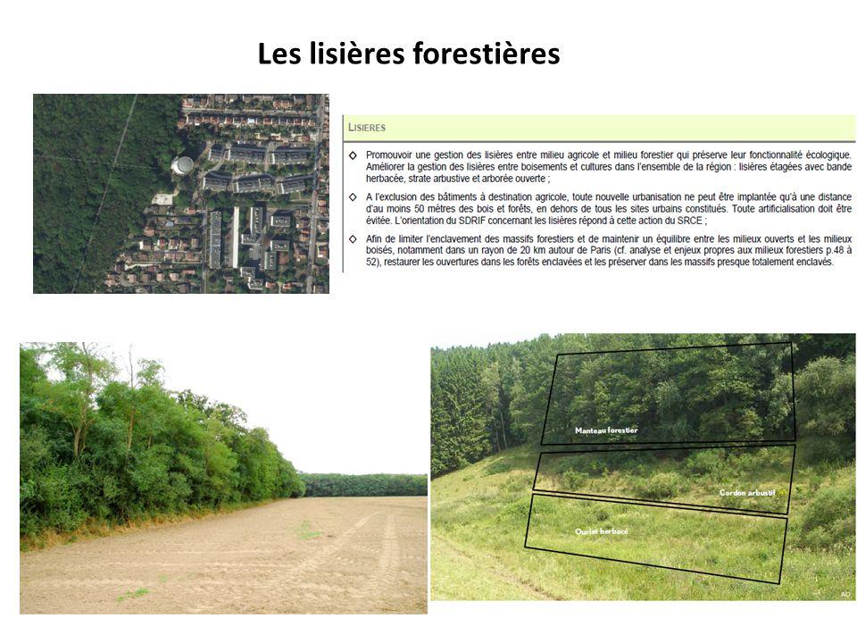 Les lisières forestières