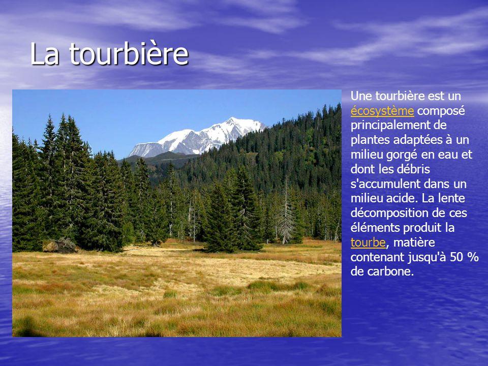 La tourbière Une tourbière est un écosystème composé principalement de plantes adaptées à un milieu gorgé en eau et dont les débris s'accumulent dans