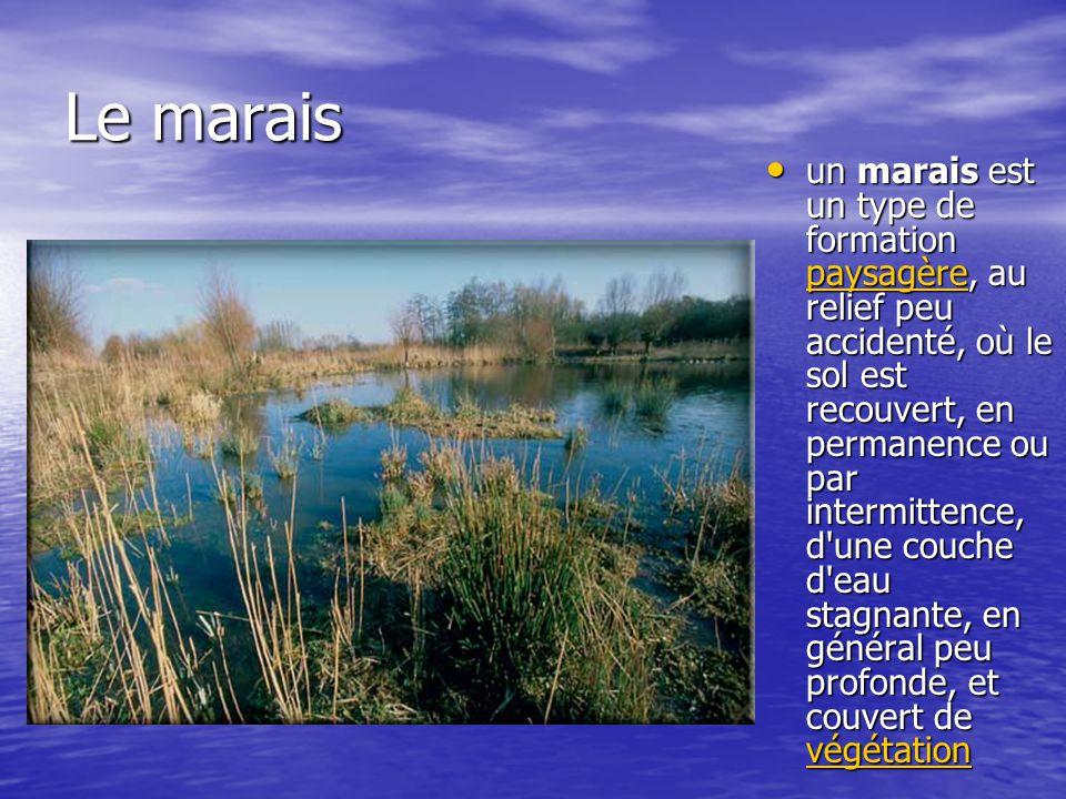 Le marais un marais est un type de formation paysagère, au relief peu accidenté, où le sol est recouvert, en permanence ou par intermittence, d'une co