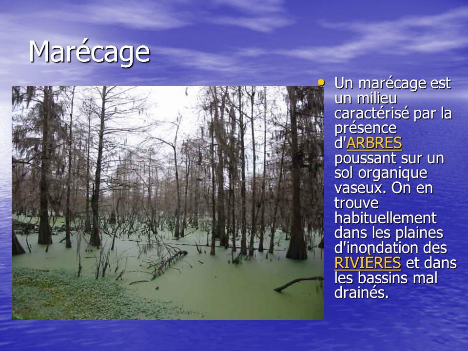 Marécage Un marécage est un milieu caractérisé par la présence d'ARBRES poussant sur un sol organique vaseux. On en trouve habituellement dans les pla