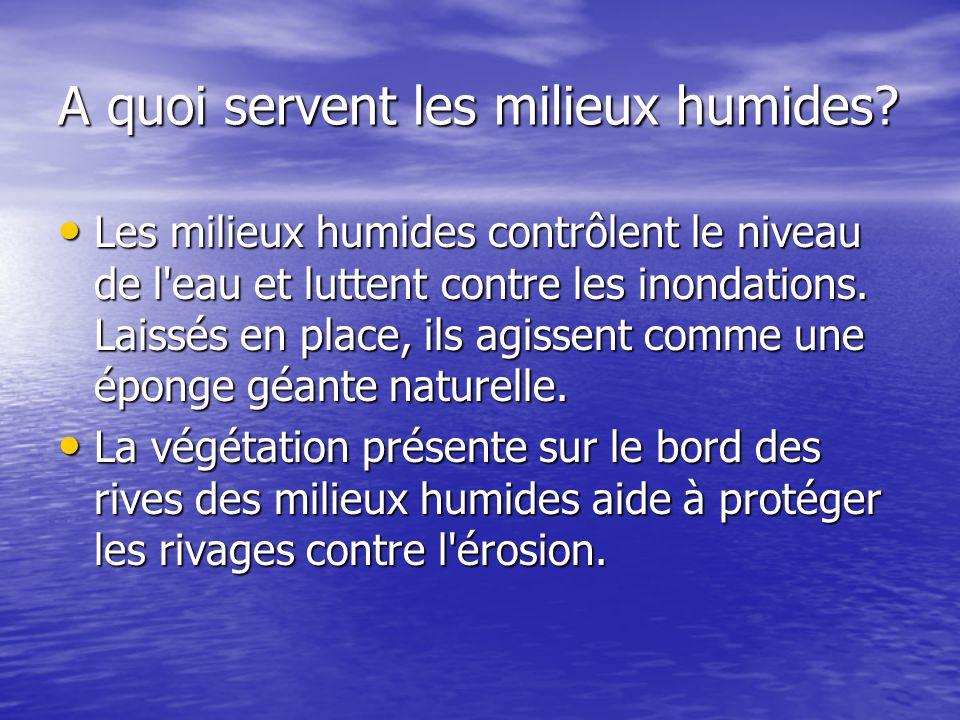 A quoi servent les milieux humides? Les milieux humides contrôlent le niveau de l'eau et luttent contre les inondations. Laissés en place, ils agissen
